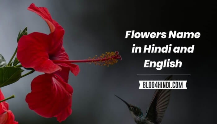 flowers name with image