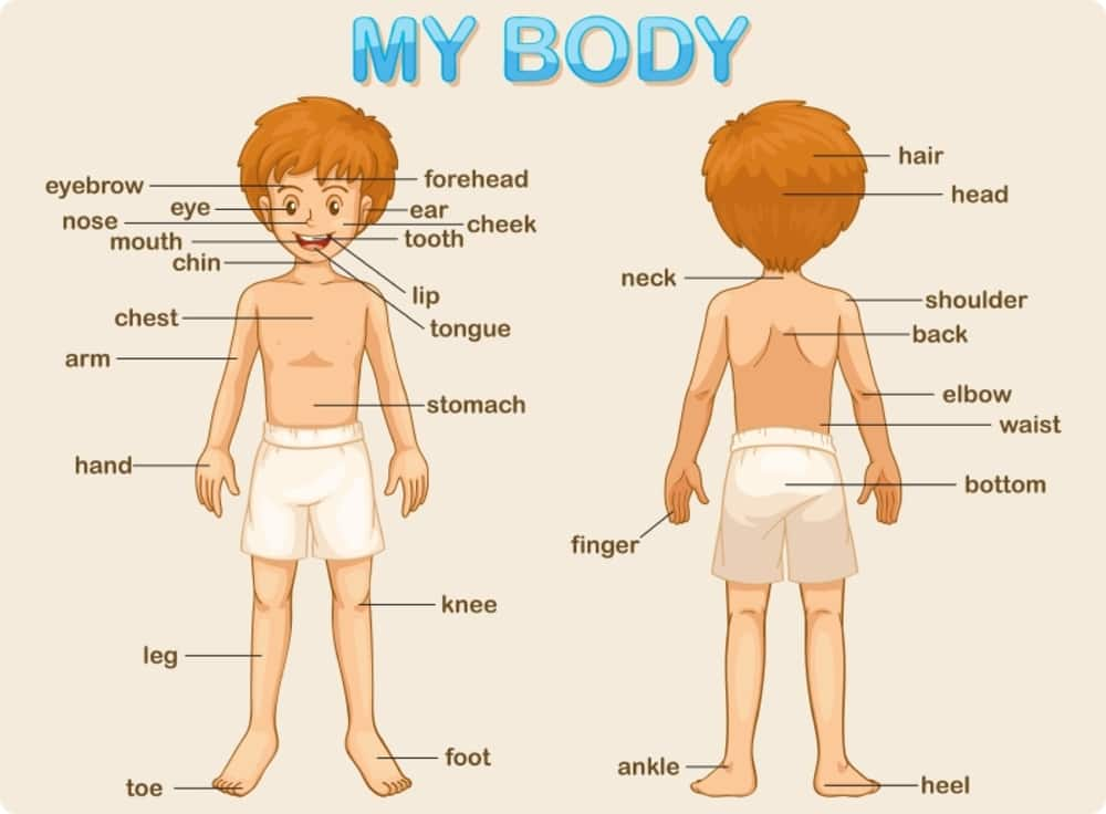 Parts of Body Name